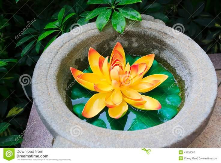 fleur-de-lotus-d-43330060